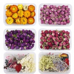 Dried flowers - chrysanthemum - resin craft / jewellery making / crystal epoxy resin filling